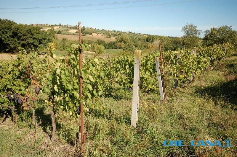 Terreno vendita SALUDECIO (RN) - 99 LOCALI - 7400 MQ