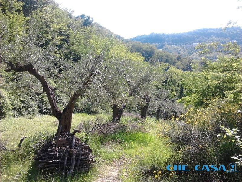 Terreno vendita MONTEFIORE CONCA (RN) - 2600 MQ - foto 1