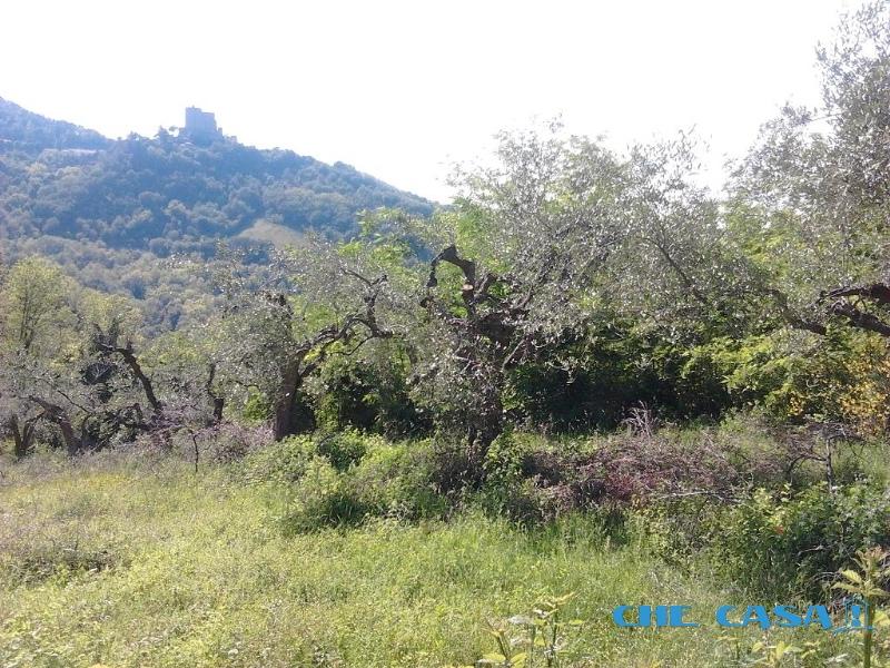Terreno vendita MONTEFIORE CONCA (RN) - 2600 MQ - foto 3